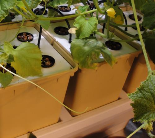 A roponique growshop materiel de culture interieur for Materiel culture interieur